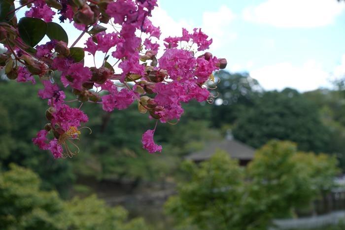 20140914_奈良・トレイルラン (39)