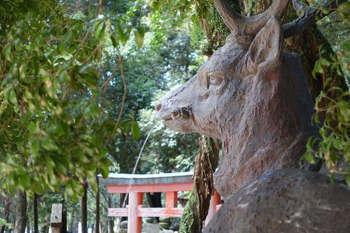 20140914_奈良・トレイルラン (49)
