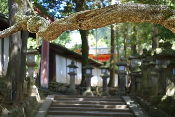 20140914_奈良・トレイルラン (50)